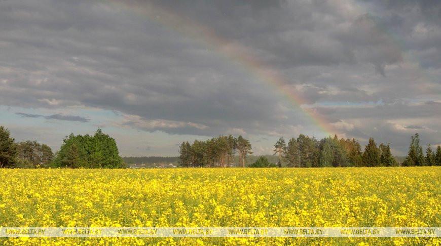 Жаркая и дождливая погода ожидается на этой неделе в Беларуси