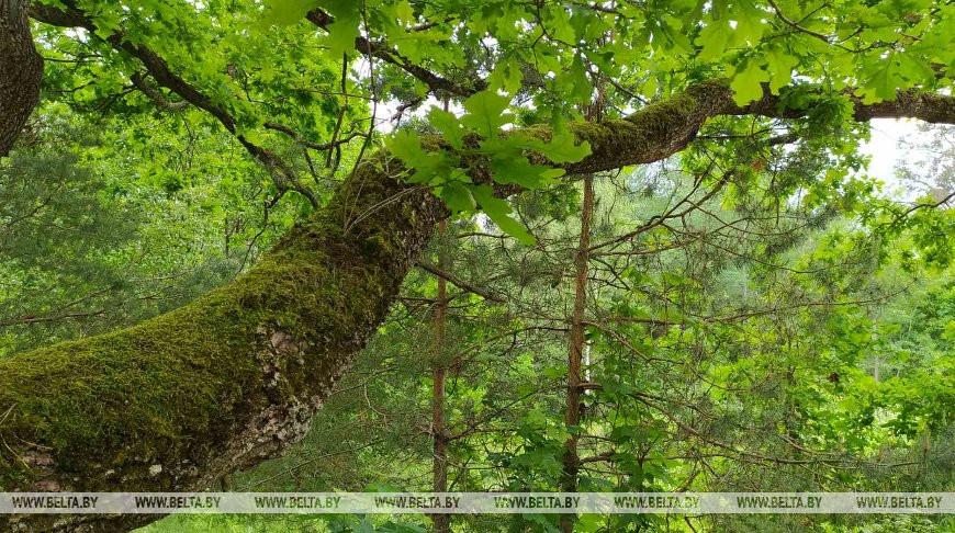 Запреты и ограничения на посещение лесов действуют в восьми районах Беларуси