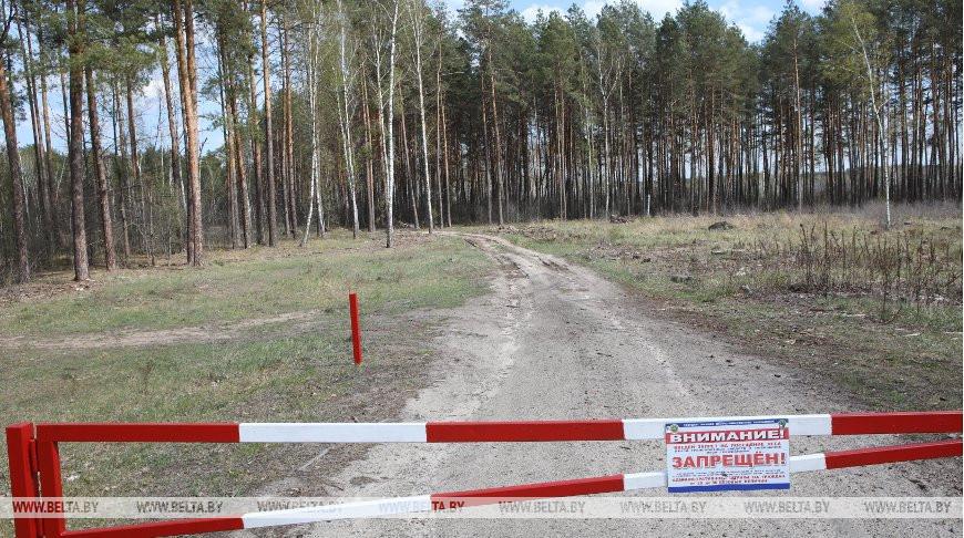 Запреты и ограничения на посещение лесов действуют в шести районах Беларуси