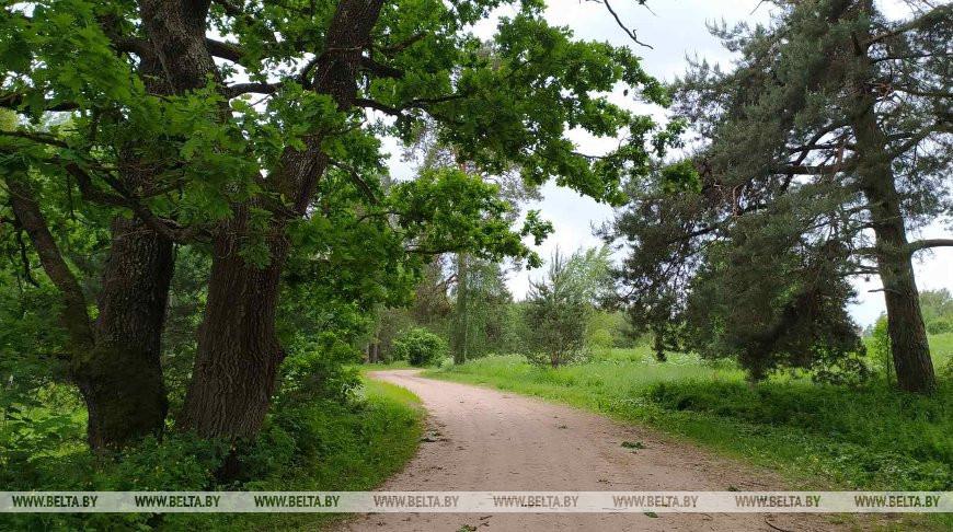 Запреты и ограничения на посещение лесов действуют в семи районах Беларуси