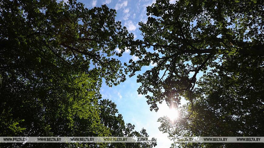 В Ивацевичском, Березовском и Пружанском районах запрещено посещать леса. Опасно!