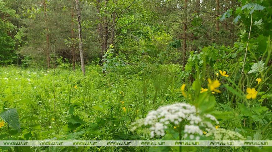 Запрет на посещение лесов снят на всей территории Беларуси