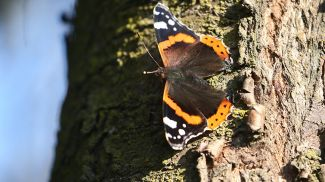 Бабочка в Беловежской пуще
