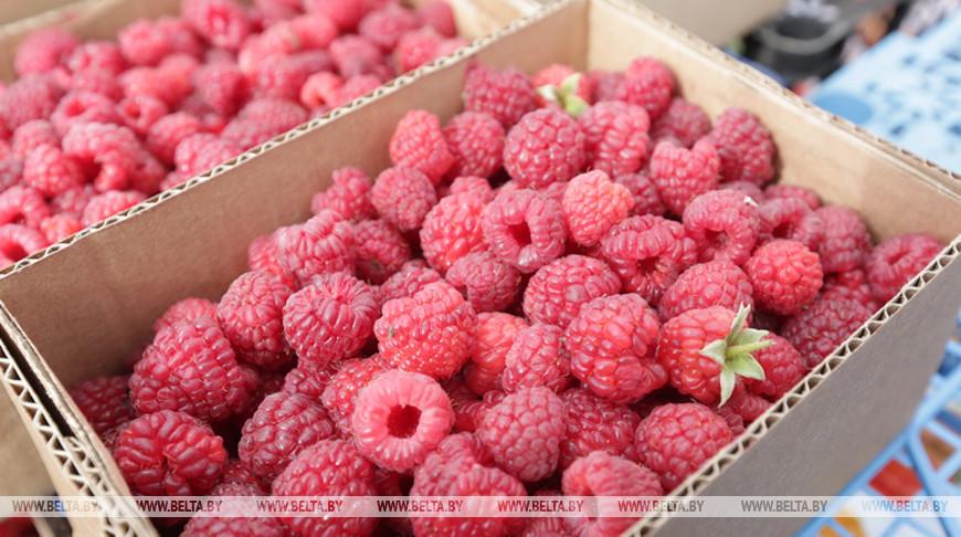 НАН планирует создать не менее 10 новых сортов плодовых и ягодных культур