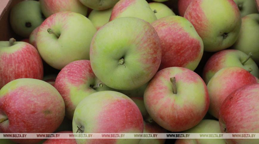 ФПБ: существенный рост цен на продукты наблюдается только по отдельным позициям