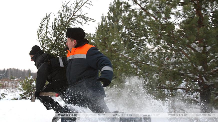 В преддверии зимних праздников в Беларуси будет установлен усиленный режим охраны лесов.