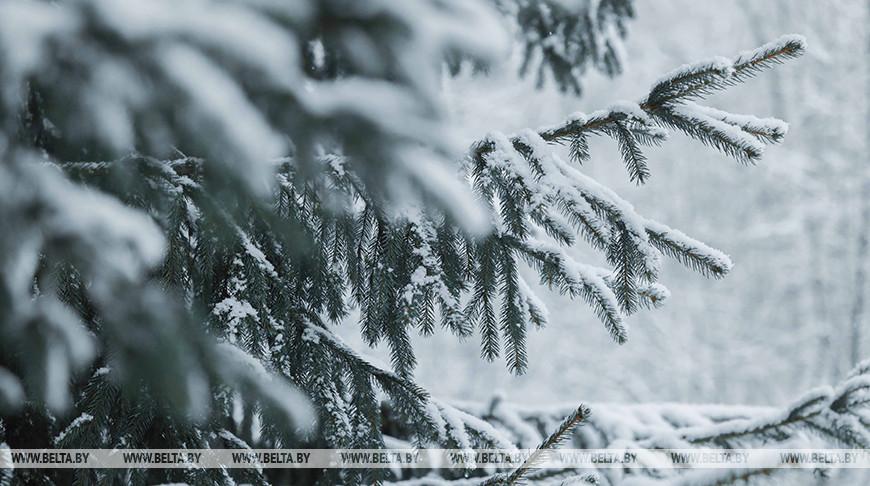Небольшой снег, гололедица и до 6 градусов мороза ожидается в Беларуси 27 декабря