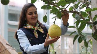 Хозяйка агроусадьбы Лариса Иванова с лимоном, вес которого достигает 900 г