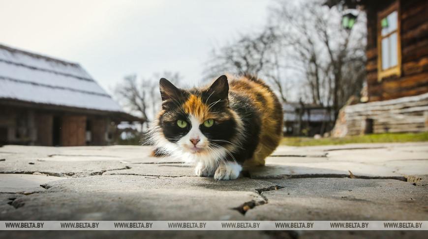 Приют для бездомных животных обустроят в Ивацевичах