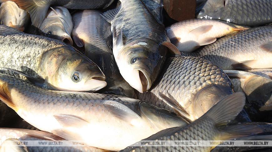 Предприятие в Березовском районе оштрафовали на Br12,7 тыс. за нарушение правил рыболовства