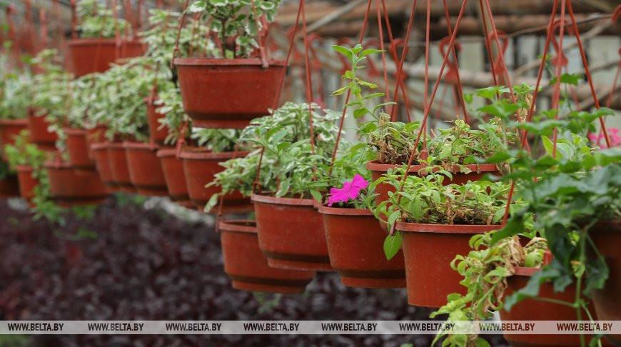 Озеленители Бреста планируют начать в этом сезоне высадку цветов раньше обычного