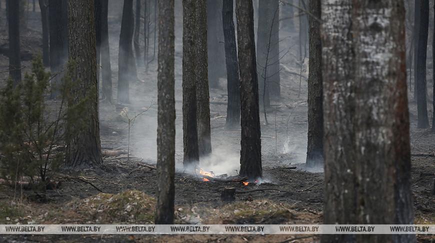 Без дождя... Высокий класс пожарной опасности установился в лесах Брестской области