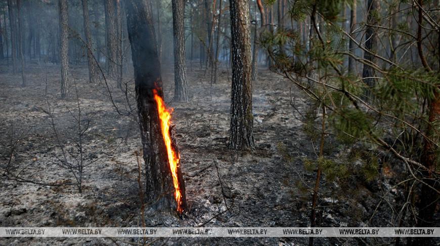 Запрет на посещение лесов во всех районах Брестской области могут ввести до конца недели