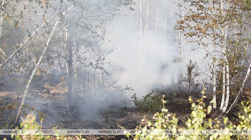 В белорусских лесах сохраняется пожароопасная обстановка.