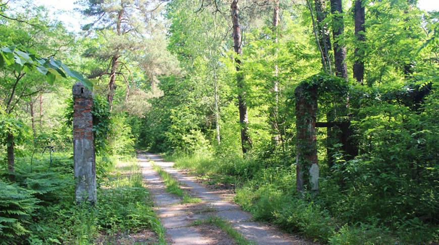 """В урочище Черный лес. Фото  """"Голас часу"""""""