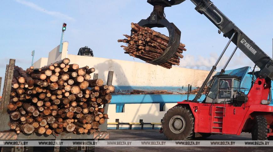 Новые комплексы для сушки древесины запустят в Брестском, Столинском и Телеханском лесхозах