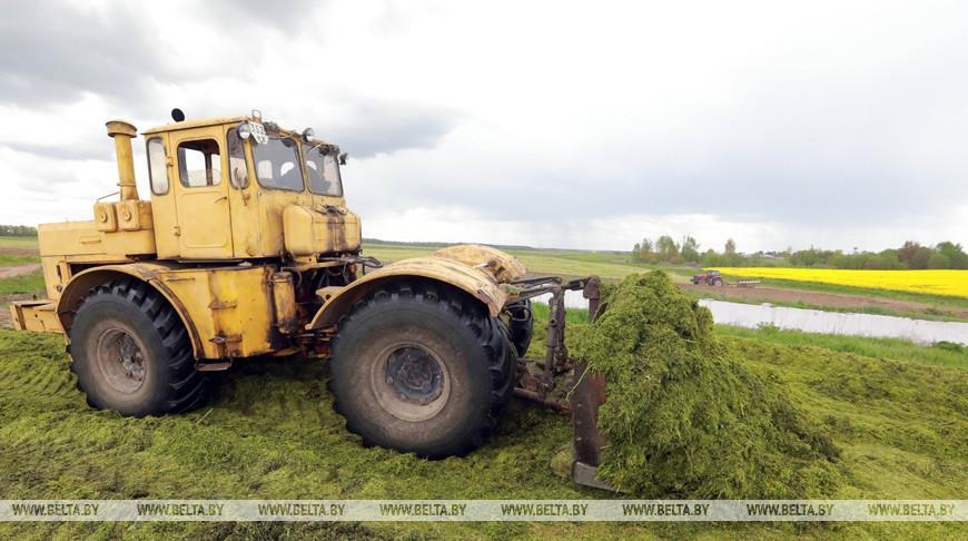 Хозяйства Брестской области пополняют запасы травяных кормов за счет озимых культур