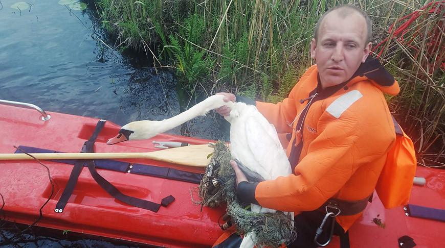 Фото Сенненской районной инспекции природных ресурсов и охраны окружающей среды