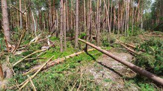 Фото Брестского государственного производственного лесохозяйственного объединения