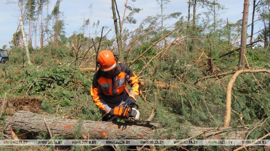 Лесхозы Брестской области начали разрабатывать участки после бури