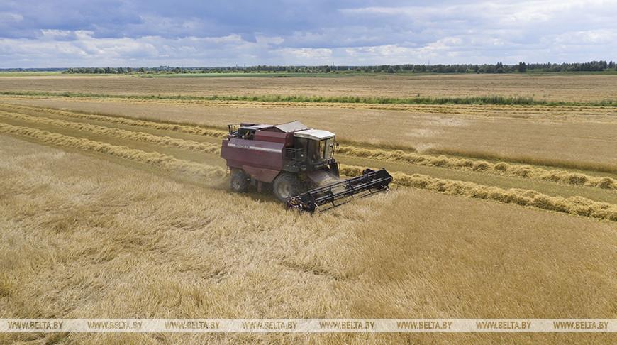 Лидирующий на жатве в Минской области экипаж намолотил уже 4,5 тыс. т зерна