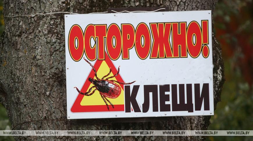 В Брестской области уменьшилось число пострадавших от укусов клещей