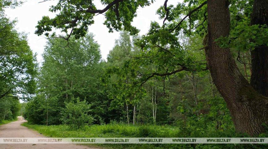 В Червенском районе пенсионер почти 15 часов блуждал по лесу
