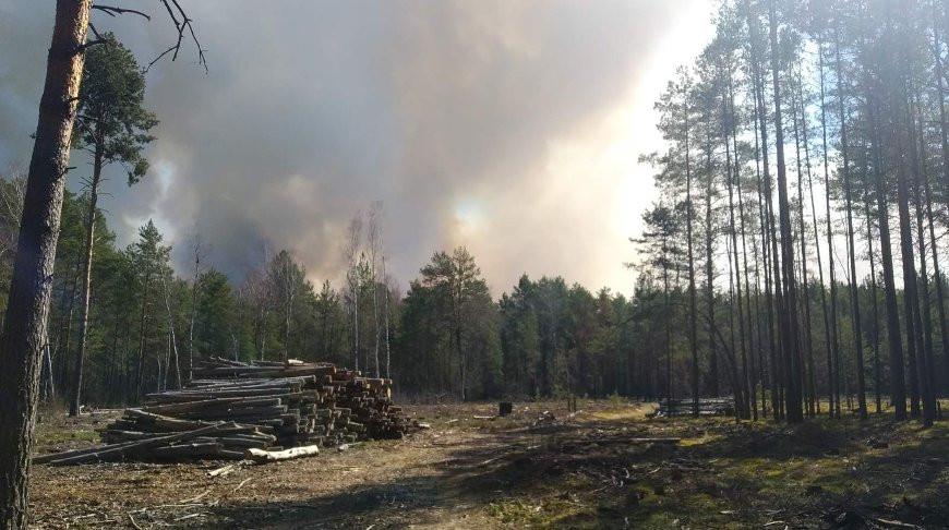 Крупный лесной пожар произошел в Брестской области.