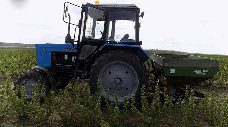 В Ляховичском районе трактористу раздробило ногу