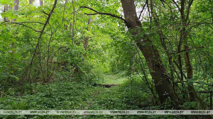 Потерявшегося в лесу под Борисовом мальчика нашли