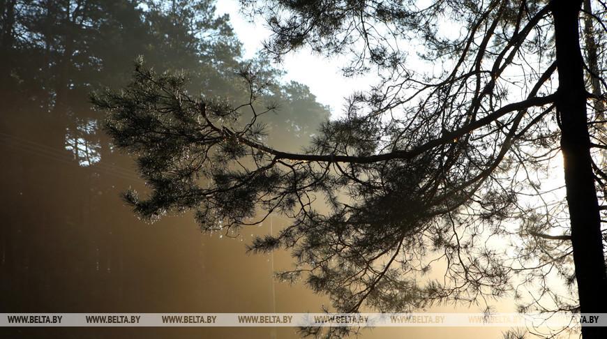 В Малоритском районе нашли заблудившуюся в лесу пенсионерку