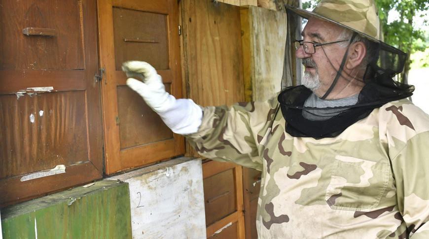 Регион Хорватии из-за гибели 50 млн пчел объявлен зоной стихийного бедствия
