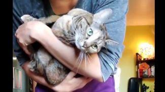 Скриншот из видео