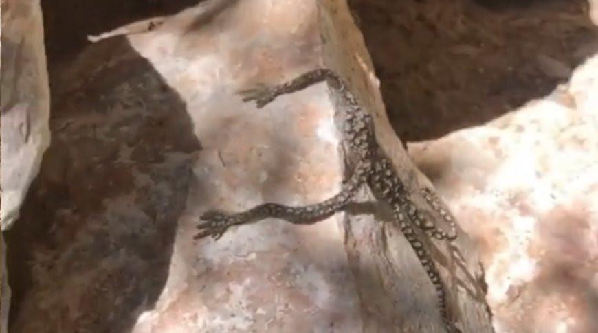 Женщина обнаружила загадочное существо с человеческими руками - видео