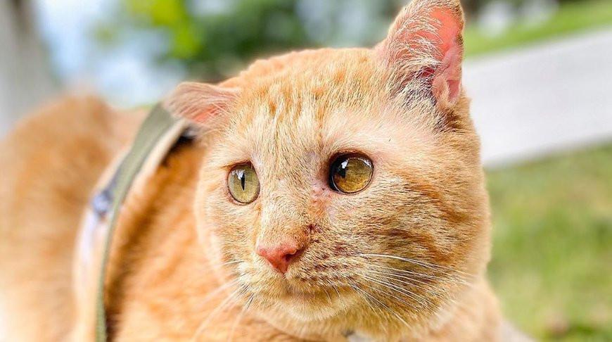 Девушка приютила очень грустного котика и через год его было не узнать - видео