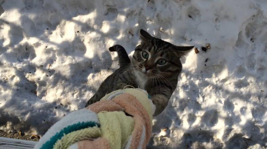 Нагулялся? Кот возвращается домой через окно - видео