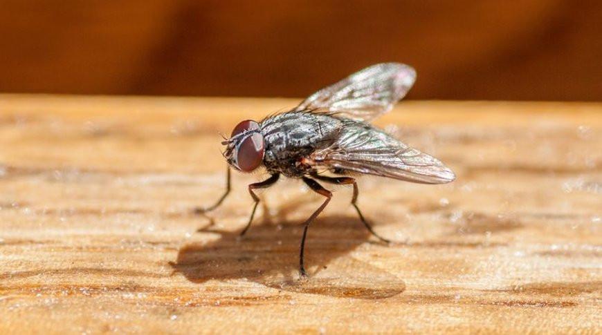 Пенсионер попытался убить муху и случайно взорвал собственный дом