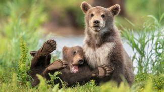 Фото Comedy Wildlife Photo Awards
