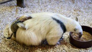 Фото Злинского зоопарка