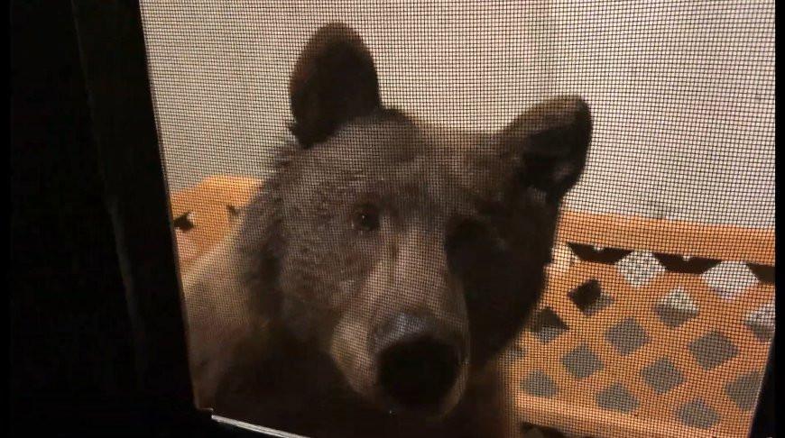 Есть что пожевать? Любопытный медведь наведался в гости к американцу - видео