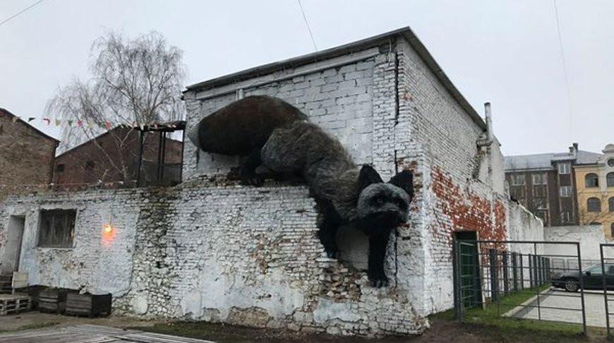 В Риге обнаружили гигантскую лису - фото