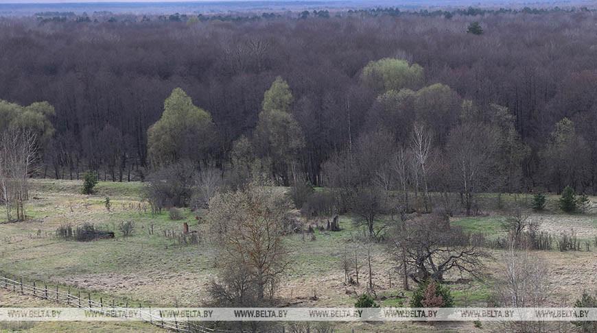 На территории Полесского государственного радиационно-экологического заповедника. Фото из архива