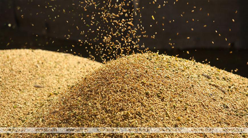 Минсельхозпрод установил фиксированные цены на продукцию растениеводства для госнужд на 2021 год
