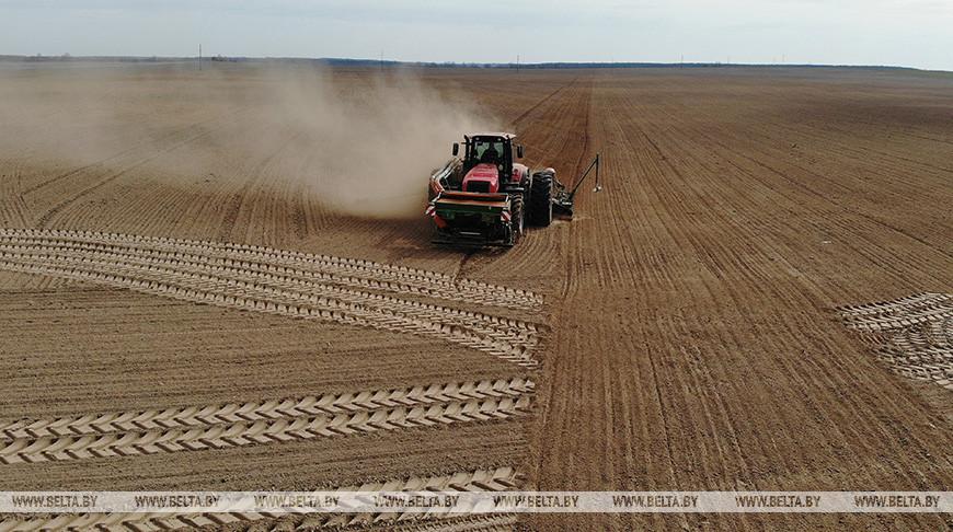 Ранние яровые посеяли в Беларуси более чем на 30% площадей