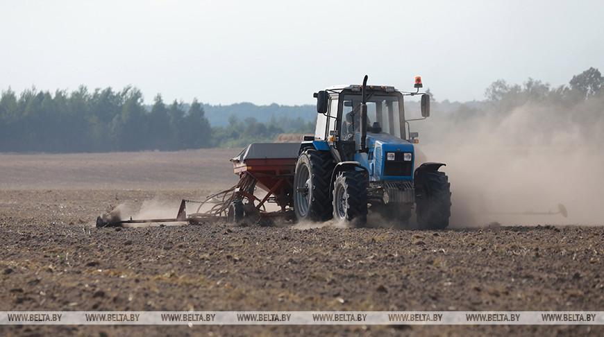 Погодные условия для сева озимого рапса благоприятные - Белгидромет