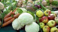Глава крестьянского хозяйства считает важным направлением поддержку органического земледелия