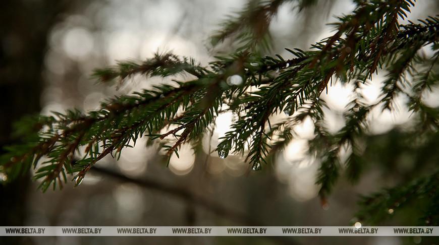 Леса Беларуси ежегодно поглощают более 35 млн т углекислого газа