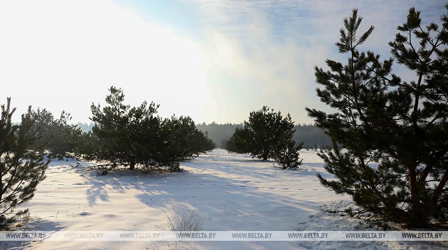 Температура воздуха в Беларуси зимой была близка к климатической норме