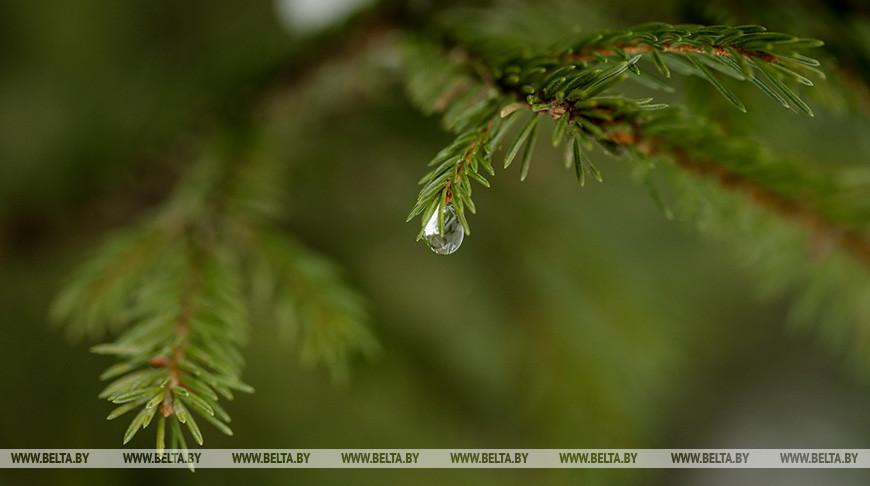 До +17°С ожидается в Беларуси 27 марта