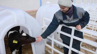 На молочно-товарной ферме. Фото из архива